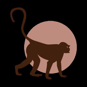 Monkey walking around
