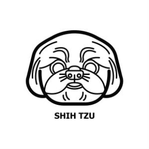 How Much Does A Shih Tzu Cost?