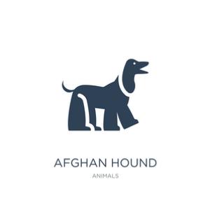 Afghan Hound dog breed vector