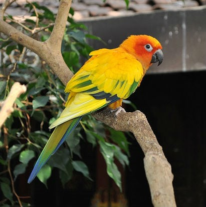 How Much Does a Sun Conure Cost?