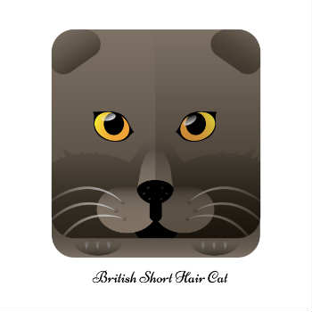 How Much Does a British Shorthair Cost?