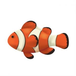Pretty swimming clownfish