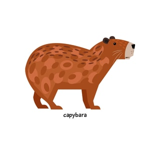 How Much Does a Capybara Cost?