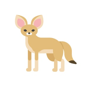 How Much Does A Fennec Fox Cost?