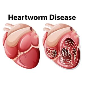How Much Does Dog Heartworm Treatment Cost?