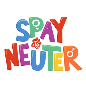How Much Does it Cost to Neuter or Spay a Cat?